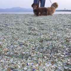 ミニチュアダックス/うちのわんこ/お散歩/人工砂/おでかけワンショット この海岸の砂はガラスなどを加工したもので…