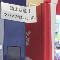 ツバメ/はじめてフォト投稿 仕事帰りに寄ったスーパーでふと自販機みた…