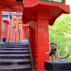 鳥居/神社仏閣/令和元年フォト投稿キャンペーン/令和の一枚/おでかけ/旅行/... 数年ぶりに太皷谷稲成神社へ お先にどうぞ…