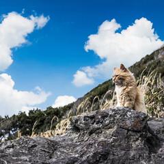 写真加工アプリ/Photoshop camera/城ヶ島/猫さん/一眼レフカメラ/一眼レフのある生活/... Photoshop cameraで加工し…