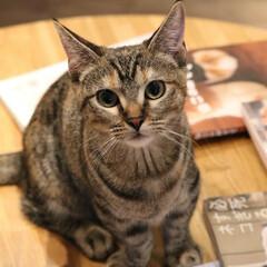 一眼レフのある生活/猫/ネコカフェ/写真好きと繋がりたい/フェンダー越しの私の世界/一眼レフカメラ研究中/... 野生の猫さんもいいけど猫カフェの猫さんも…