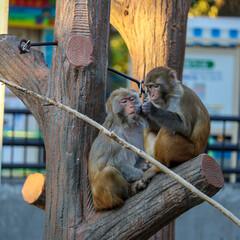 フェンダー越しの私の世界/一眼レフ好きな人と繋がりたい/一眼レフのある生活/一眼レフのある暮らし/一眼レフカメラ研究中/一眼レフカメラ/... 井の頭自然公園には猿もいます🙌🏻 動物の…(3枚目)