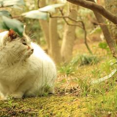三渓園/横浜/猫さん 昔撮った横浜の三渓園の猫さん♪