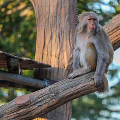 フェンダー越しの私の世界/一眼レフ好きな人と繋がりたい/一眼レフのある生活/一眼レフのある暮らし/一眼レフカメラ研究中/一眼レフカメラ/... 井の頭自然公園には猿もいます🙌🏻 動物の…(2枚目)