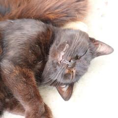 仙台/猫さん/田代島/ねこ なんかいい夢見てそうな笑顔の猫さん(笑)…