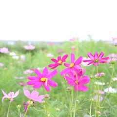 花の名前はわかりません/花/相模川沿い/写真好きと繋がりたい/一眼レフのある生活/一眼レフのある暮らし/... 最近、お花を撮っていない気がする、、、 …