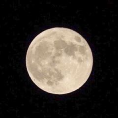 満月/望遠レンズ/写真好きと繋がりたい/フェンダー越しの私の世界/一眼レフ好きな人と繋がりたい/一眼レフのある生活/... おはようございます!! と、言っても夕方…