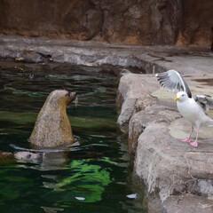 旭山動物園/北海道/アザラシ/カモメ/はじめてフォト投稿 先日旭山動物園へ遊びに行ってきました!