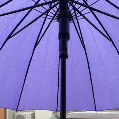 梅雨/傘/雨 大雨で九州地方が大変なことになっています…