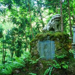 緑いっぱい/苔/狛犬/神社/令和元年フォト投稿キャンペーン/令和の一枚/... 桜松神社の狛犬📷