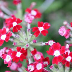 おしゃれ ハッキリクッキリの花ですね〜😯