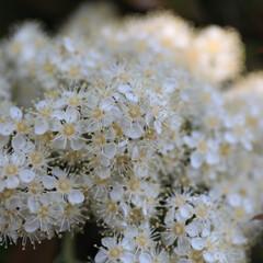 おしゃれ 白い花達〜😃✨