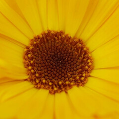 おしゃれ 黄色い日の丸〜😁🇯🇵