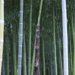 おしゃれ タケノコ伸びすぎて既に竹やん😂🎍