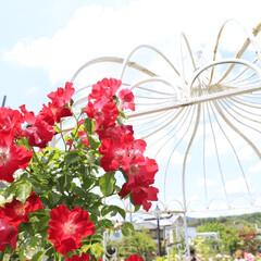 おしゃれ ココは、園芸店とレストランがある人気スポ…(3枚目)