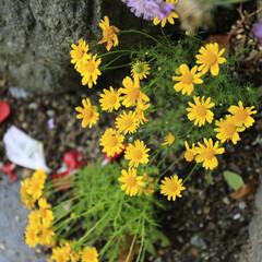おしゃれ 足元の花がけなげ🤗