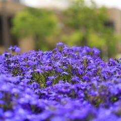 おしゃれ 紫💜三昧です😯(2枚目)