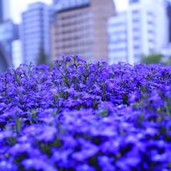 おしゃれ 紫💜三昧です😯