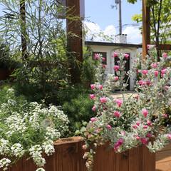 おしゃれ ココは、園芸店とレストランがある人気スポ…(6枚目)