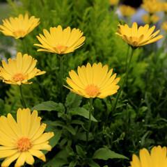 おしゃれ 上を向いて咲く花も良いですね😃🎶 元気出…