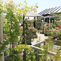 おしゃれ ココは、園芸店とレストランがある人気スポ…(8枚目)
