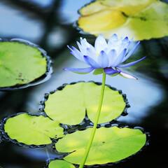 「葉っぱの縁の水が可愛く見えます😄」(1枚目)
