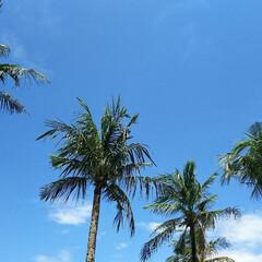 ヤシの木/リゾート/バリ島/はじめてフォト投稿 バリ島!! 年末年始の旅行。