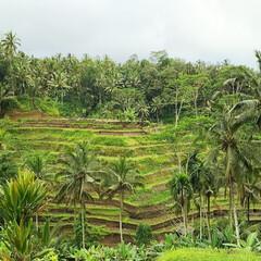 棚田/海外旅行/バリ島/みんなにおすすめ バリ島の棚田。ここで乗る崖のブランコはオ…