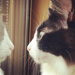 chuya/うちのネコ/うちの子自慢 早く帰って来ないかニャ~ (中也)(1枚目)