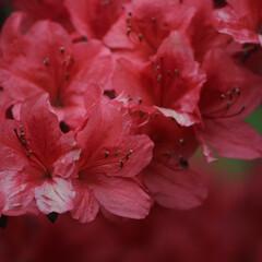 自然/朱色 色鮮やかな花々
