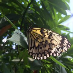 蝶/おでかけワンショット 木々に止まる蝶々 羽が綺麗でパシャリな一枚