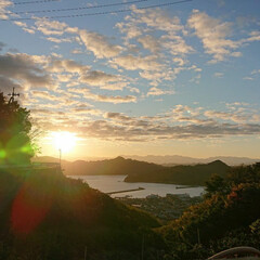 癒し/朝焼け/景色がキレイ 朝の日差しの中、収穫収穫。
