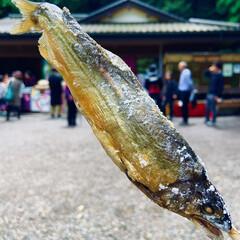 こんがりグルメ/鮎/鮎の塩焼き/鹿島神社/令和 鹿島神社にて 鮎の塩焼き食べました。  …