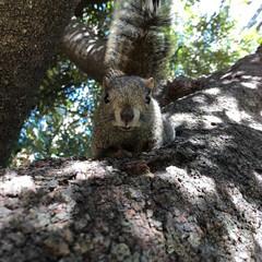 リス/りす/タイワンリス/浜松/浜松市/浜松城公園/... 出張先の浜松出会ったリスが可愛すぎた。