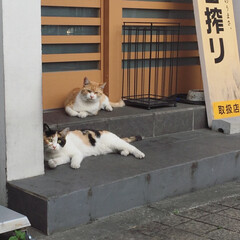 猫/ネコ/ねこ/ニャンコ/自由猫/野良猫/... 出張先で出会ったニャンコちゃん。