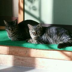 猫/親子/保護猫 私たち、引越しました。 娘(モ~ちゃん)…