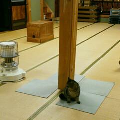 猫/親子 モ~ちゃんの来訪でわかる、今のニャンコ家…