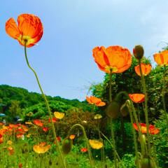 カメラ初心者/カメラ女子/令和の一枚/はじめてフォト投稿/フォロー大歓迎/わたしのお気に入り わたしのお気に入りの花❁⃘*.゚