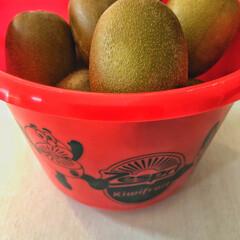 夏のお気に入り 夏のお気に入りフルーツ キウイ🥝