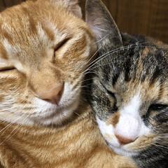 猫のいる暮らし/LIMIAペット同好会/ニャンコ同好会