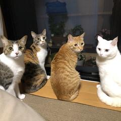 ニャンコ同好会/LIMIAペット同好会/猫のいる暮らし 夕涼み♡