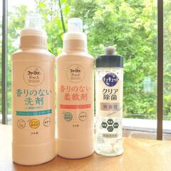 ファーファFree&(フリーアンド)香りのない柔軟剤 | ファーファ(柔軟剤)を使ったクチコミ「わたし、合成香料が苦手です。  以前は平…」