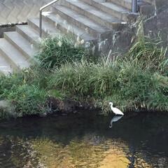 暮らし 近くの川です。 鳥が(@_@)い〜る (1枚目)