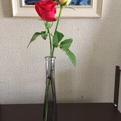 キャンドゥ 花瓶は2つとも キャンドゥで一目惚れ💓💓…