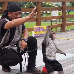 猿回しに遭遇/おでかけワンショット 可愛いこたろうくん。 一生懸命芸を披露し…(2枚目)
