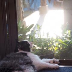 猫派 何かを一生懸命見つめています。