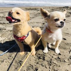 小型犬/愛犬/ほっこり/笑顔/散歩/かわいい/... ナイスツーショット!!