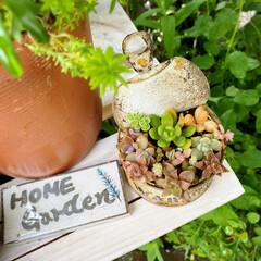 多肉植物寄せ植え/ナチュラルガーデン/植物のある暮らし/花のある暮らし/癒やしの場所/玄関前ガーデン/... 玄関前アーチのモッコウバラ満開です。 多…(4枚目)