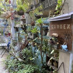 デッキガーデン/玄関前/植物/植物のある暮らし/花のある暮らし/ガーデン雑貨/... 朝晩 肌寒くなってきました。 秋ですね。…(1枚目)
