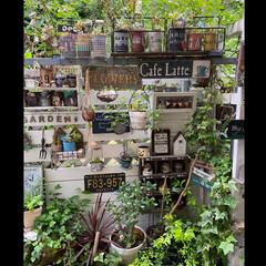 ガーデン雑貨/LIMIA/緑のある暮らし/花のある暮らし/ナチュラルガーデン/バラ好き/... 梅雨の中休み いい天気です🌞 今日も暑く…(1枚目)